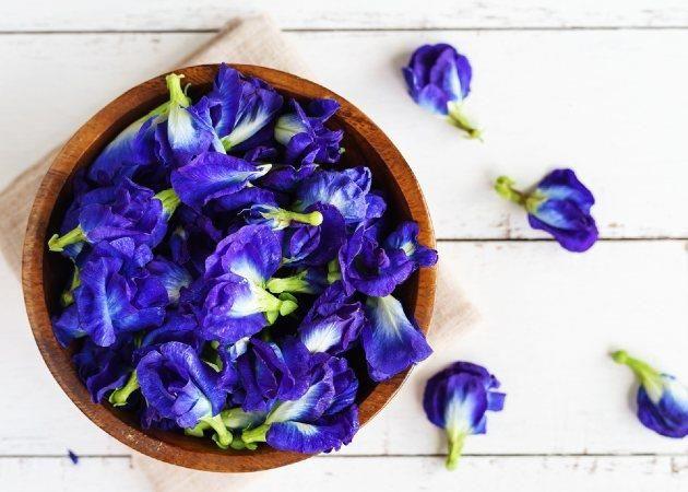 Chiết xuất hoa đậu biếc