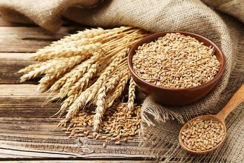 Hạt lúa mạch