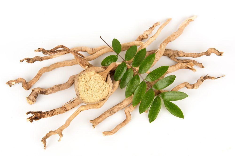 Chiết xuất rễ cây mật nhân