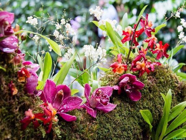 Chiết xuất hoa lan rừng